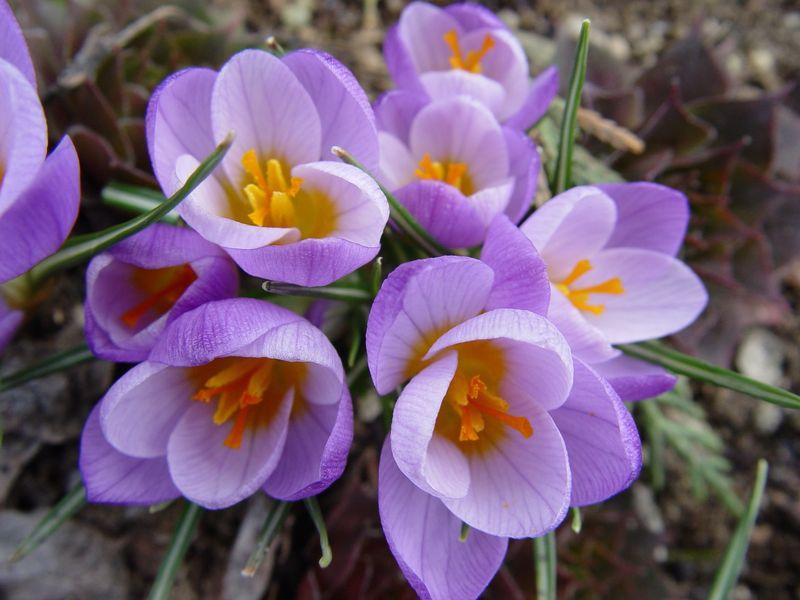 Tavaszi teendők a kertben